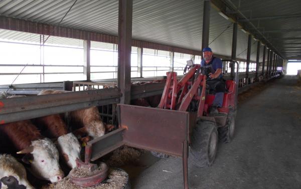 Poľnohospodár Kobler pri kŕmení